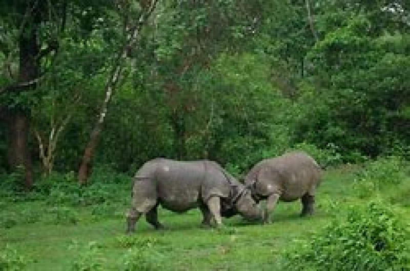 Manakamana and Chitwan Tour